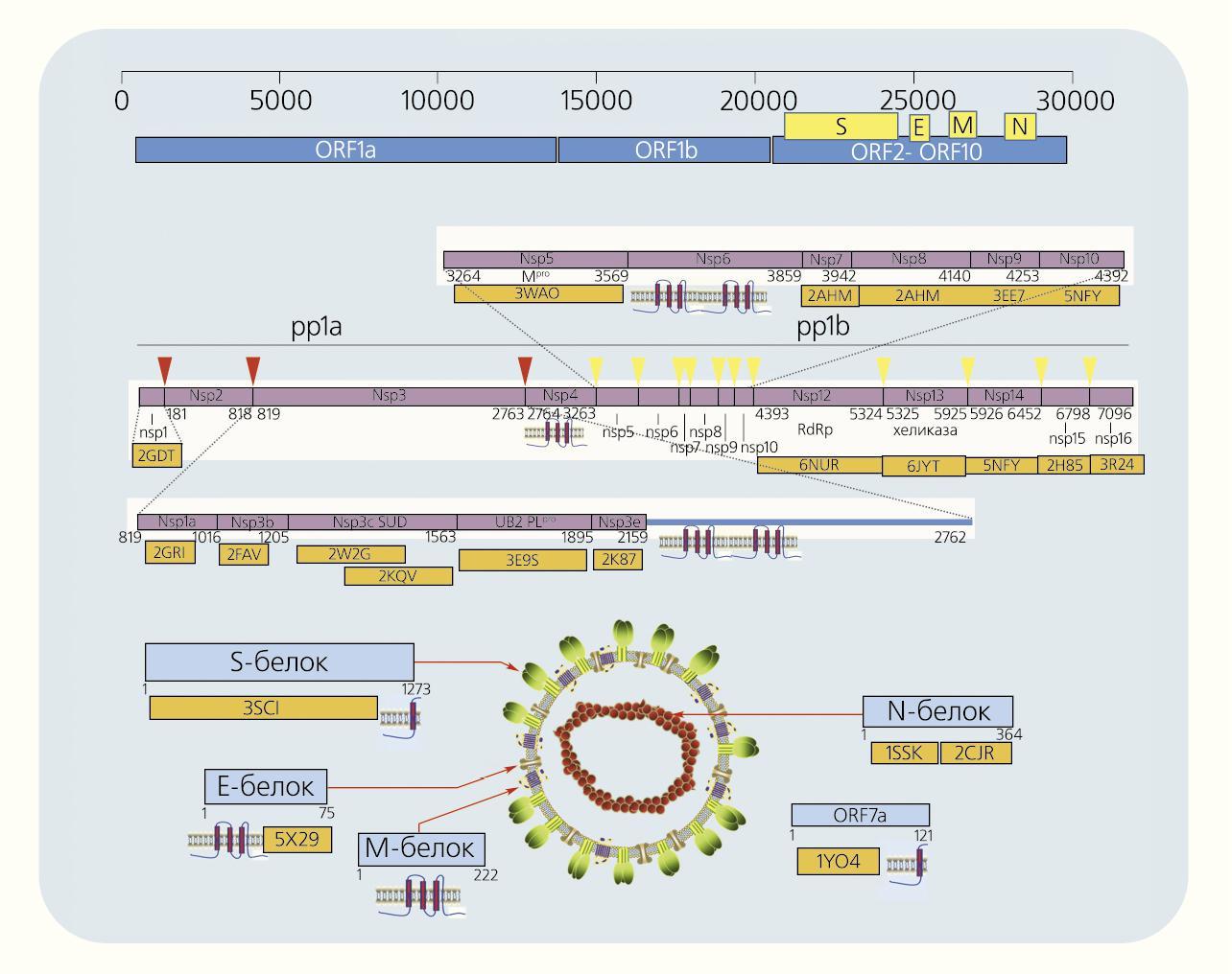 Компьютерные технологии против коронавируса: первые результаты